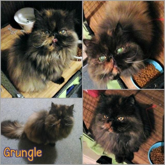 Photo of Grungle