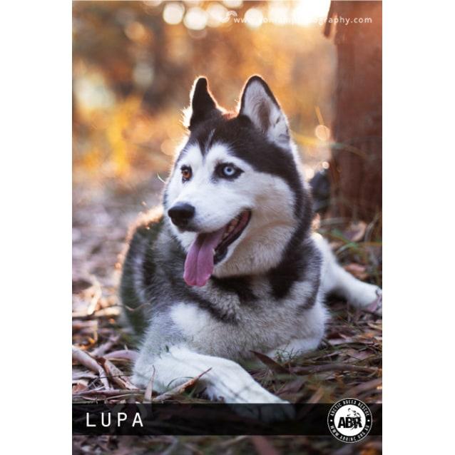 Photo of Lupa