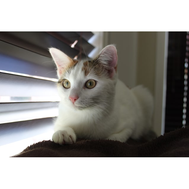 Photo of Ziva