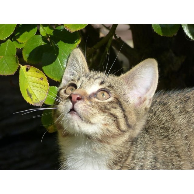 Photo of Gerald