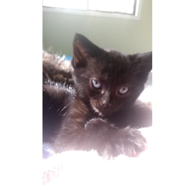 Photo of Finn