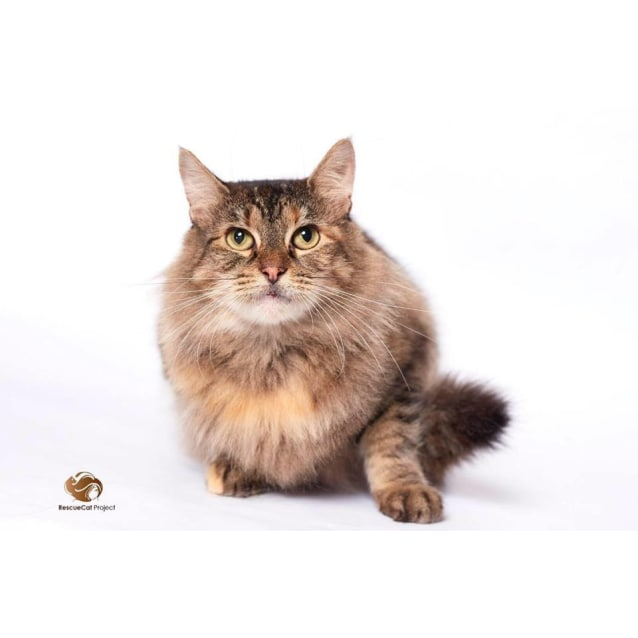 "Photo of ""Annabelle"" $49   Purrfect Match"