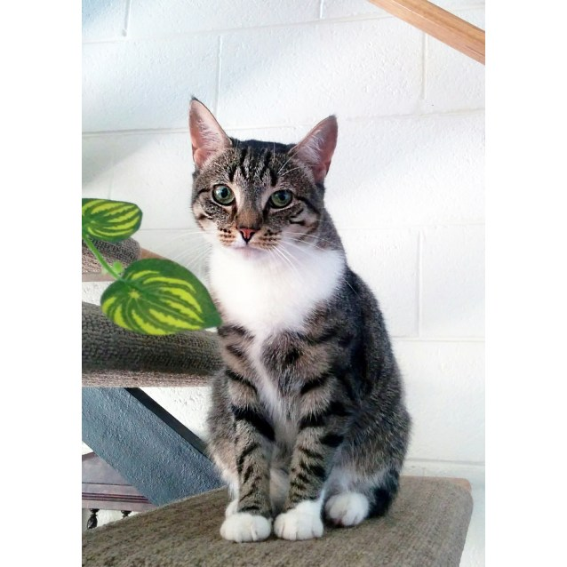 Photo of Sora (Located In Mentone)