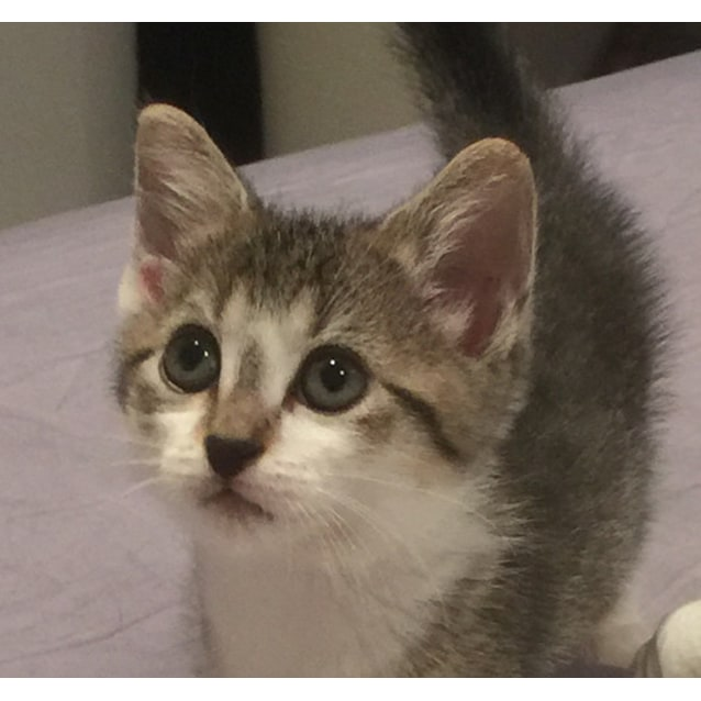 Photo of Martha (Abbotsford) **$150 Adoption**