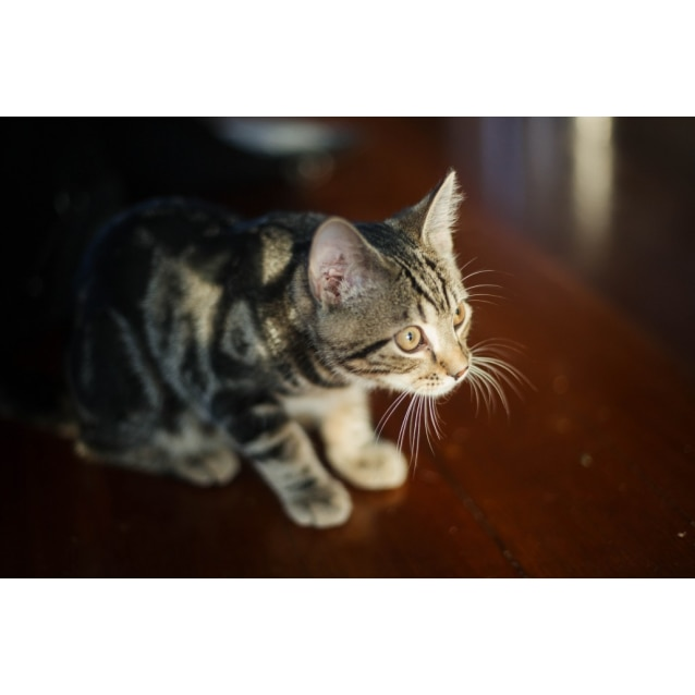 Photo of Louie