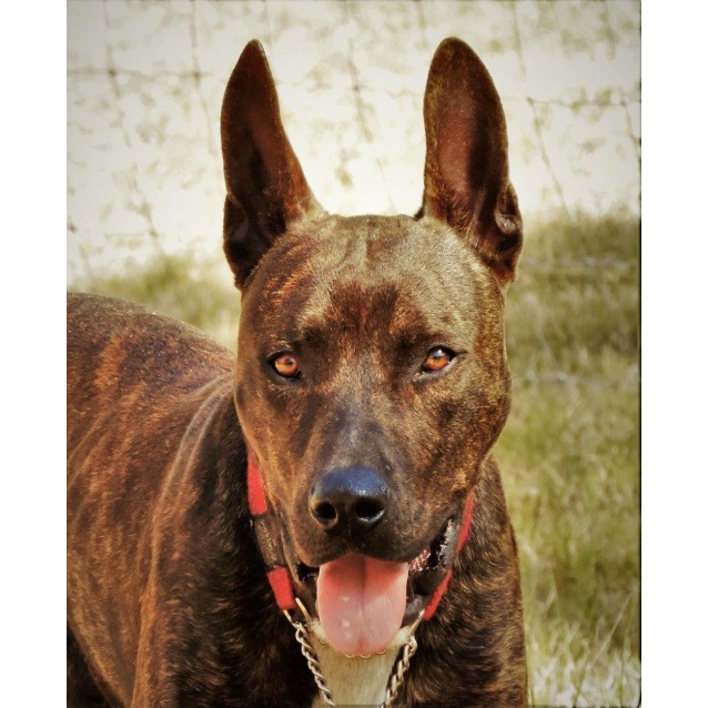 Photo of Niles