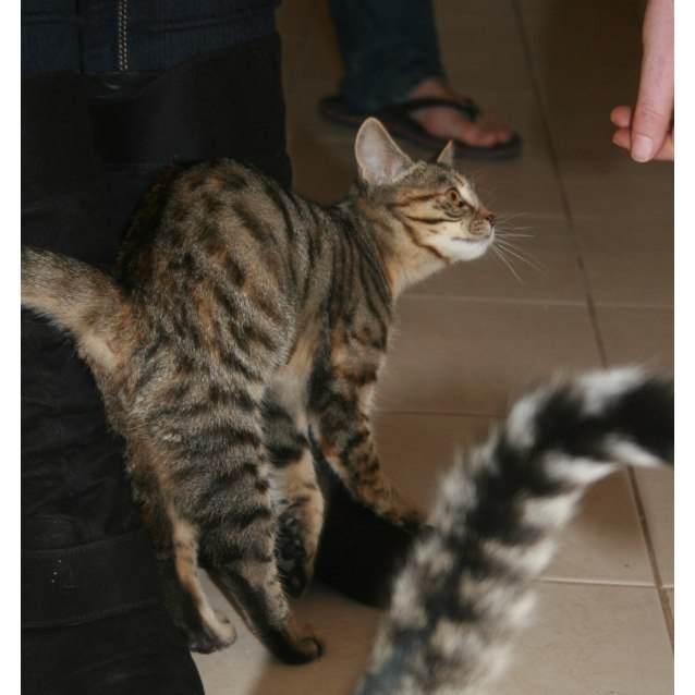 Photo of Nenet **On Trial With My New Family**
