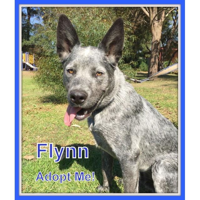 Photo of Flynn ~ On Trial 11/11/2016