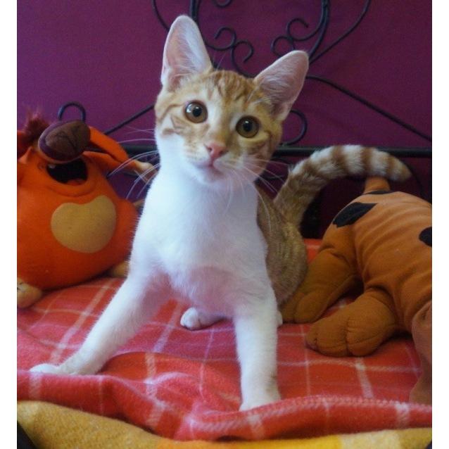 Photo of Caramello Cat