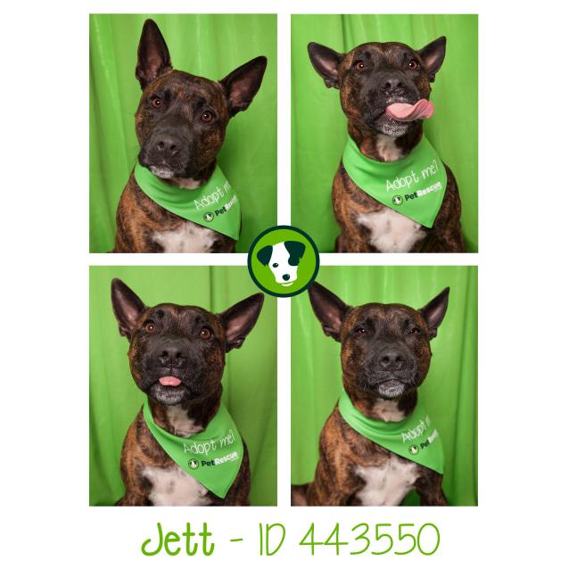 Photo of Jett
