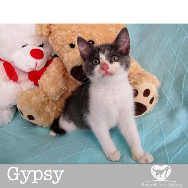 Photo of Gypsy