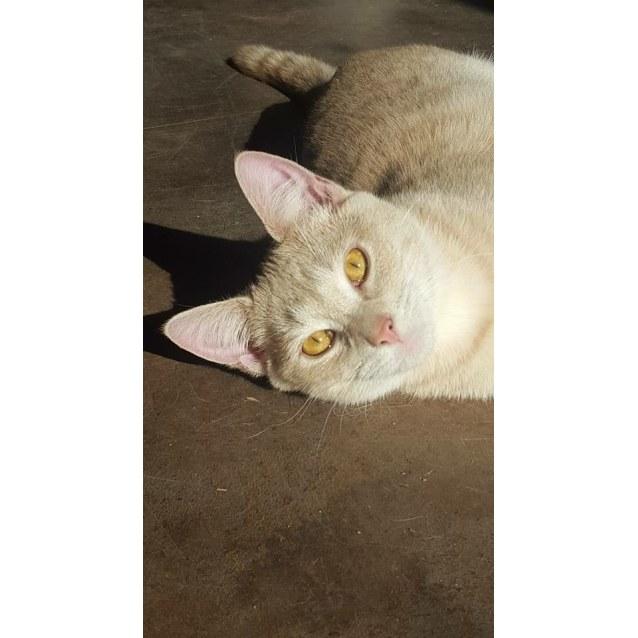 Photo of Tyga Kitten