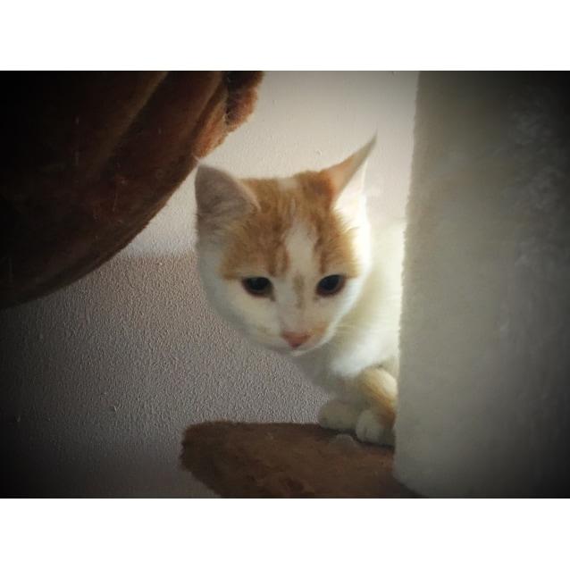 Photo of Emmeline