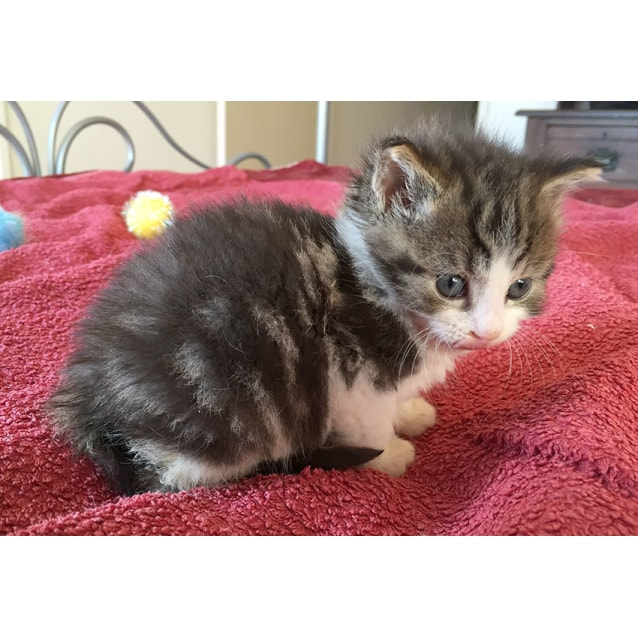 Photo of Tabitha The Orphan Kitten