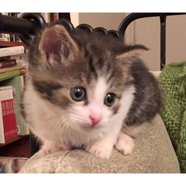 Photo of Tabitha The Orphan Kitten