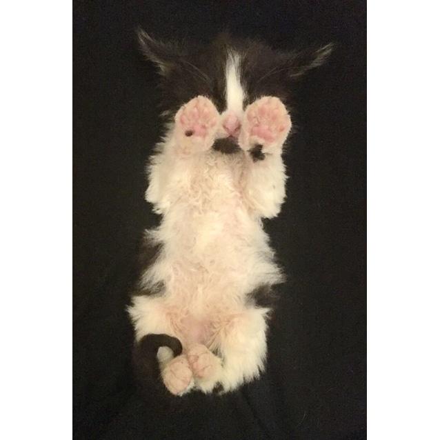 Photo of Chin Chin The Orphan Kitten