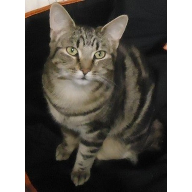 Photo of Sammy (Located In St Kilda East)