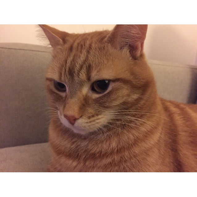 Photo of Tino (Located In Templestowe)