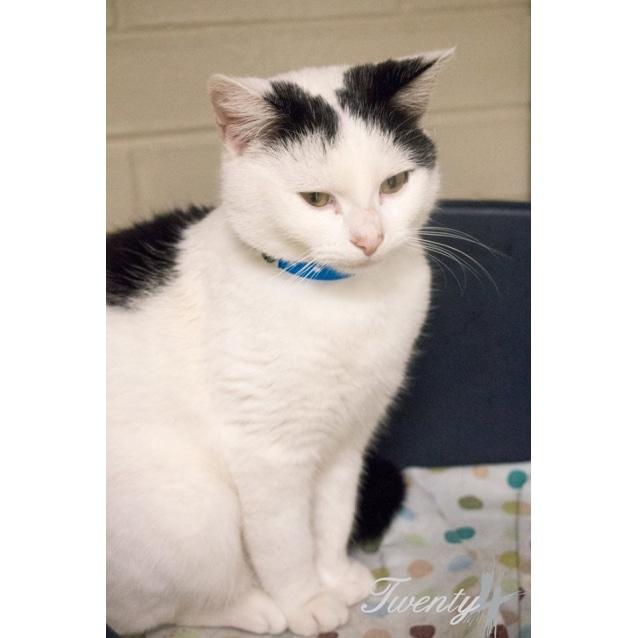 Photo of Benny (2625)