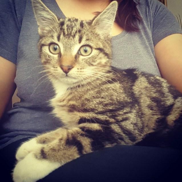 Photo of Aslan