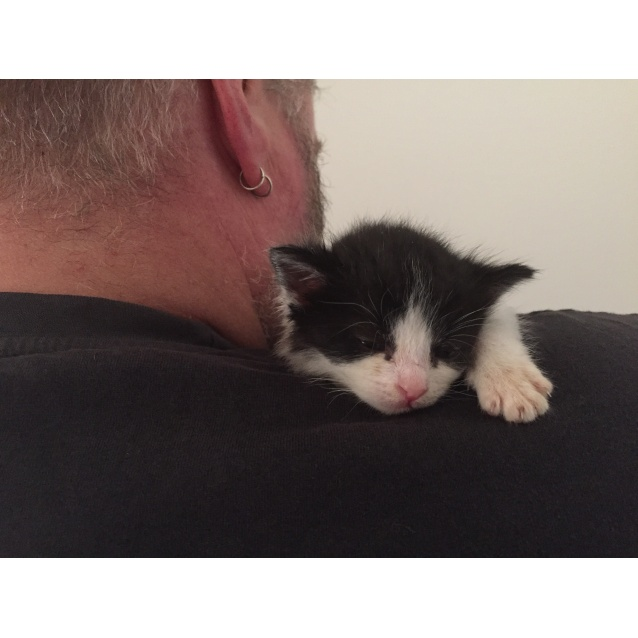 Photo of Panda The Orphan Kitten