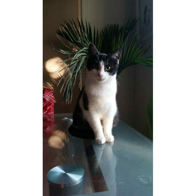 Photo of Sasha (Located In Kingsbury)