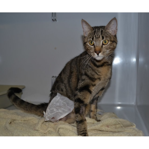 Photo of Jasper (Nc456) Adoptiion Pending
