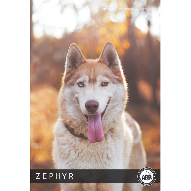 Photo of Zephyr
