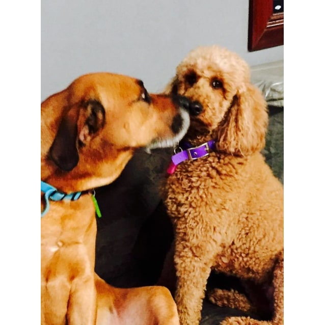 Photo of Hazel & Scooby