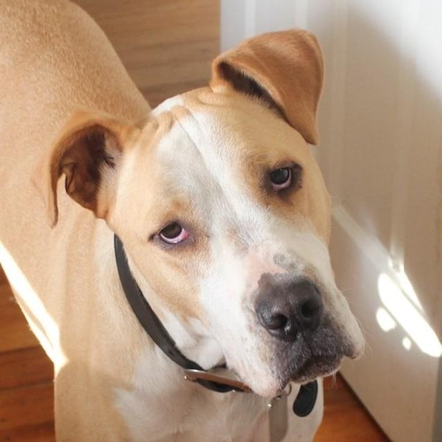 Photo of Dexter   Think Scooby Doo