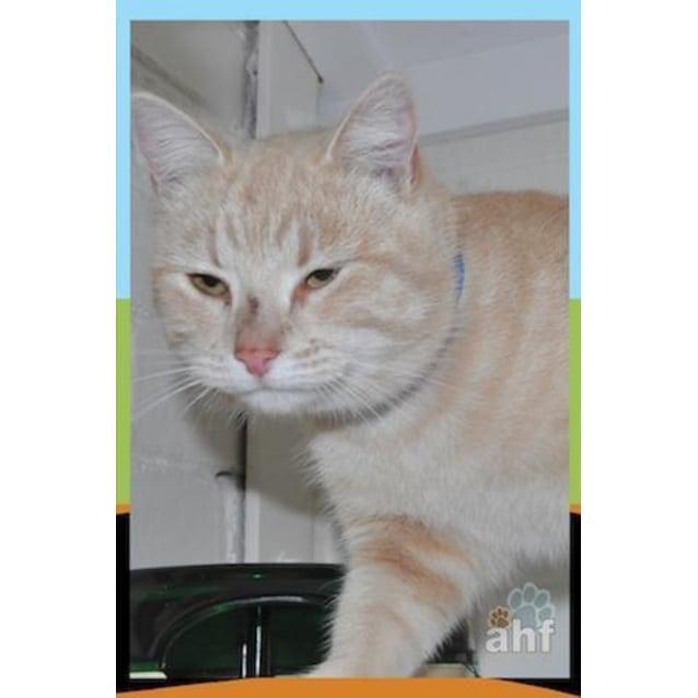 Photo of Milton (3051)