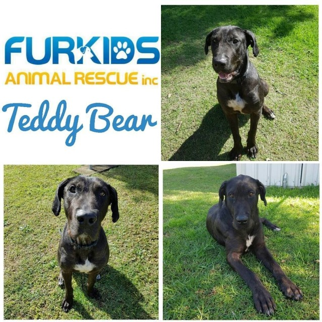 Photo of Teddy Bear