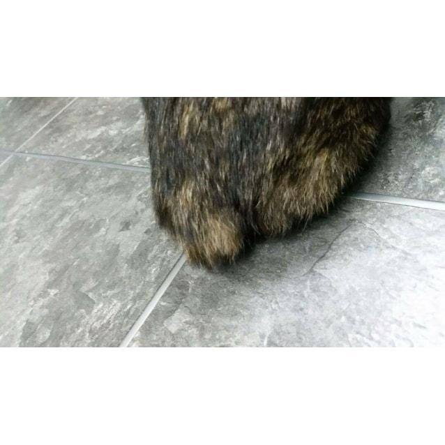 Photo of Manxy (Dog/Cat/Child Friendly)