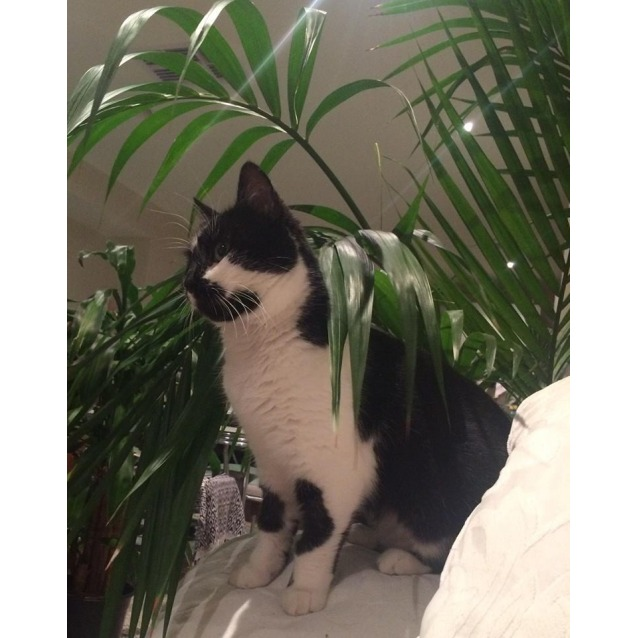 Photo of Coconut (Located In Thornbury)