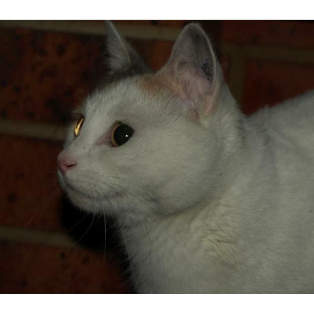 Photo of Dory