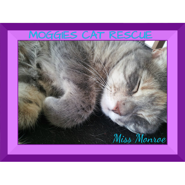 Photo of Miss Monroe (Meow Meow)