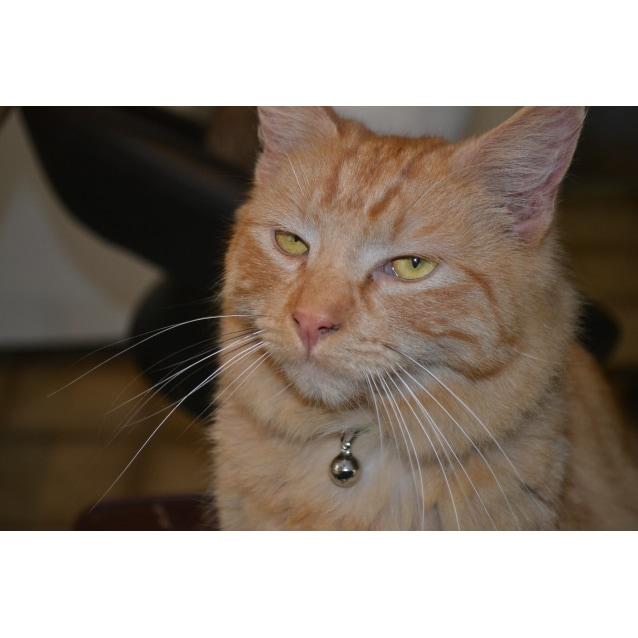 Photo of Tito