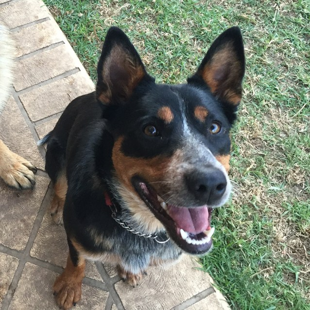 Dog Rescue Nsw Newcastle