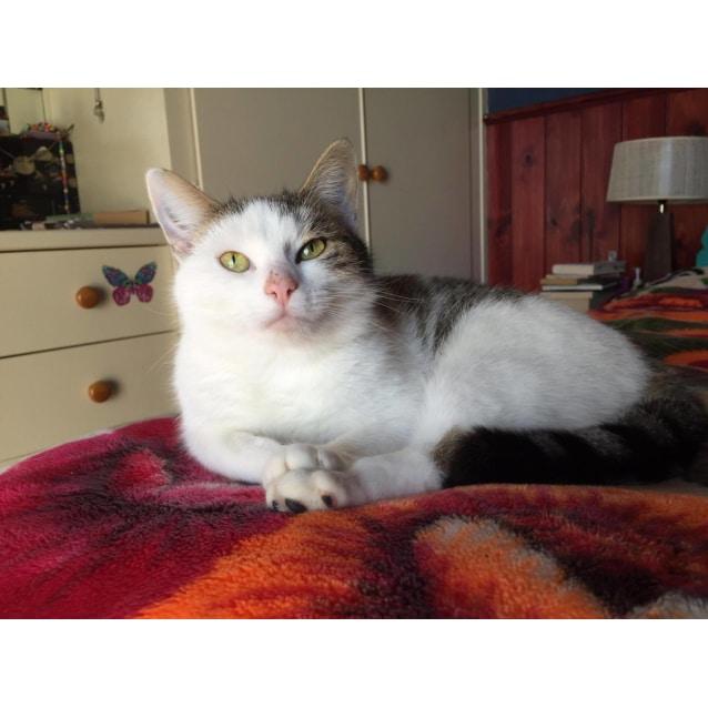 Photo of Emmy (Located In Ballarat)
