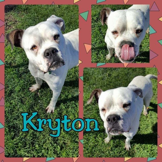 Photo of Kryton