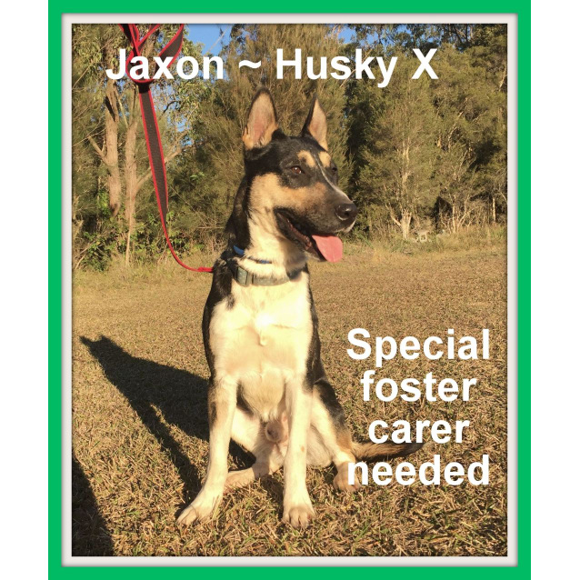 Photo of Jaxon ~ On Hold 3/9/16