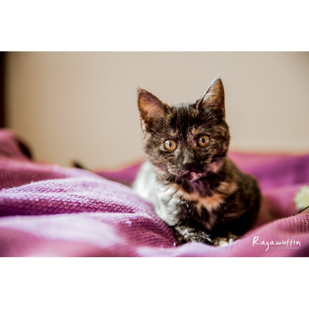 Photo of Pip (Located In Wyndham Vale)