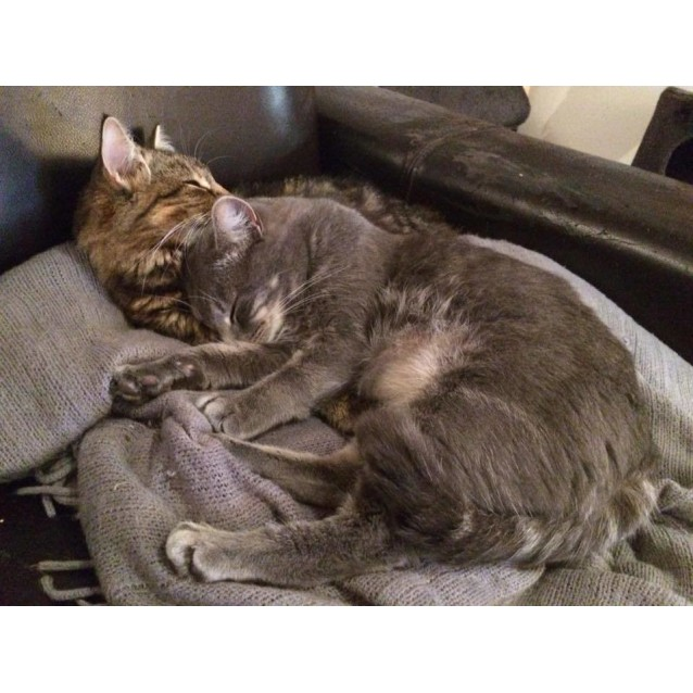Photo of Bodhi & Cassidy~Sweet And Shy