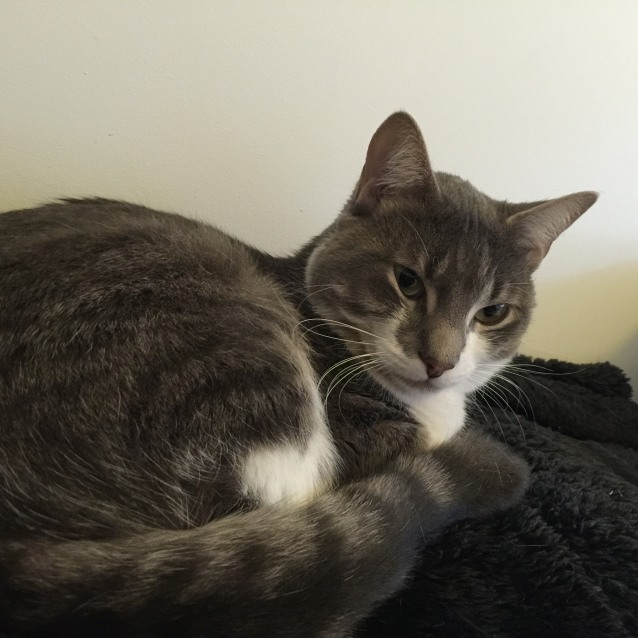Photo of Oscar (Templestowe)