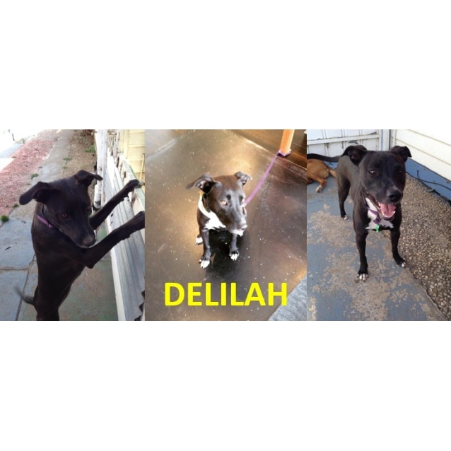 Photo of Delilah (Foster Carer Needed)