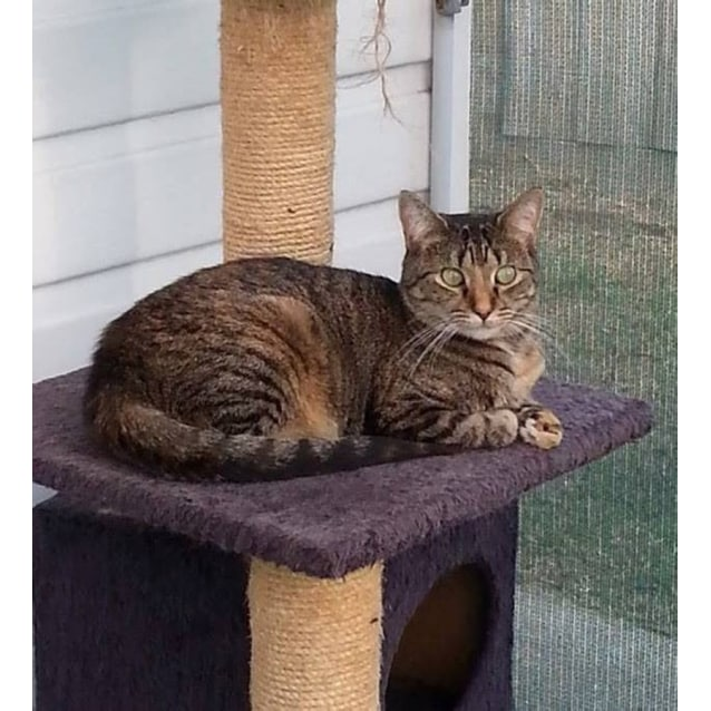 Photo of Melba **2nd Chance Cat Rescue**