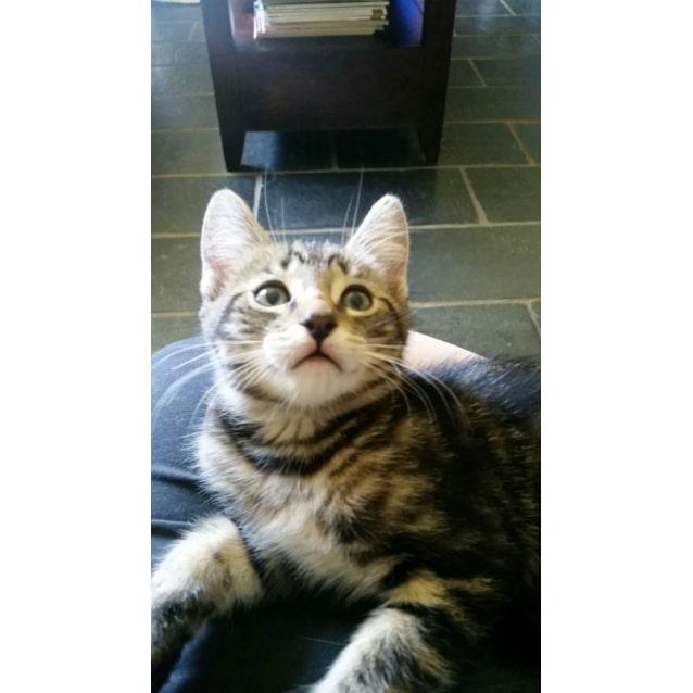 Photo of Mc Enroe *Sydney Animal Rescue Inc.*