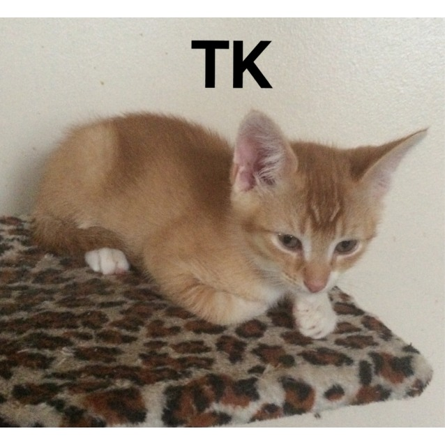 Photo of Tk / Top Kat