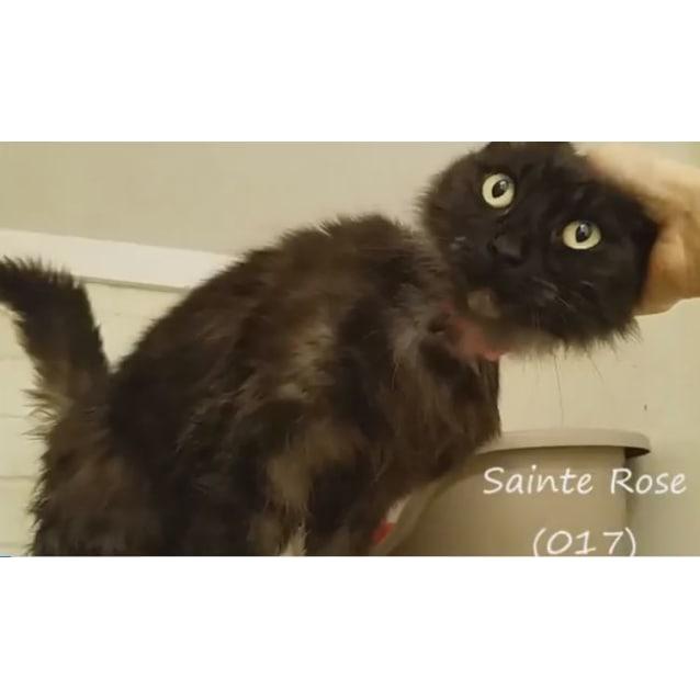 Photo of Sainte Rose (0017)