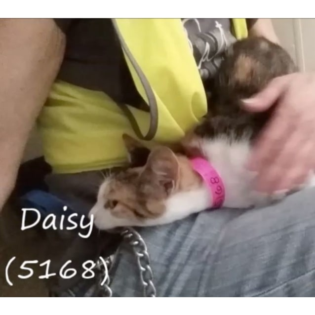 Photo of Daisy (5168)